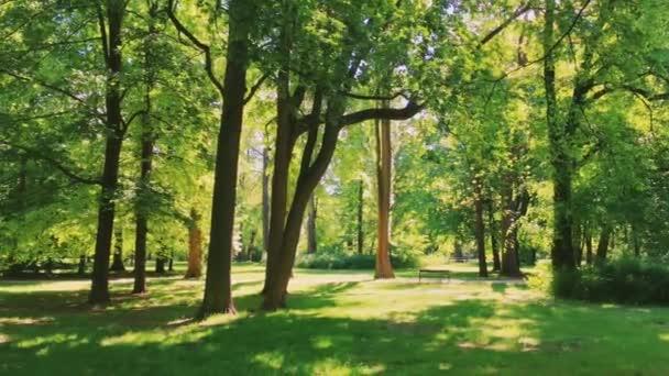 A nap süt keresztül fák napsütötte erdőben, zöld lombozat az erdőben, mint a természet, a táj és a természeti környezet