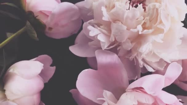 Růžové pivoňky, pastelové kvetoucí pivoňkové květy jako sváteční, svatební a květinové zázemí