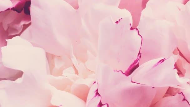Pinkfarbene Pfingstrosen in voller Blüte, pastellfarbene Pfingstrosen als Feiertag, Hochzeit und floraler Hintergrund