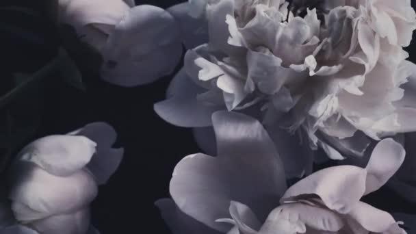Tmavé vinobraní pivoňky, pastelové pivoňkové květy v květu jako svátky, svatby a květinové zázemí