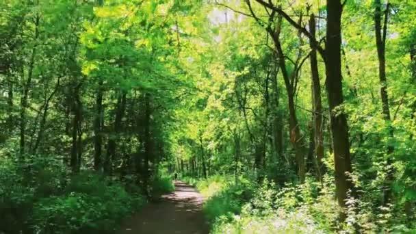 Waldpfad an sonnigen Tagen, Waldpfad und Waldpfad durch grüne Bäume als Natur, Landschaft und Natur
