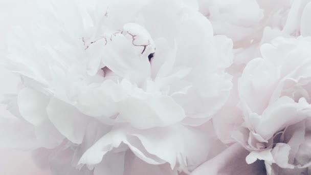Čistě bílé pivoňky, pastelově kvetoucí pivoňkové květy jako sváteční, svatební a květinové zázemí