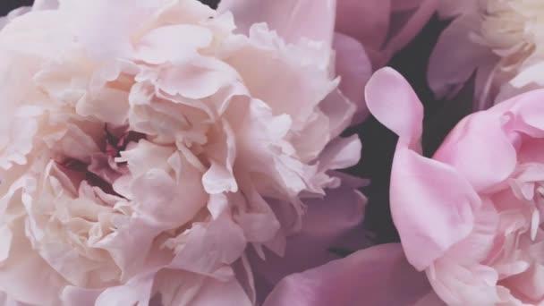 Rózsaszín bazsarózsa, pasztell bazsarózsa virágok virágzik, mint nyaralás, esküvő és virágos háttér