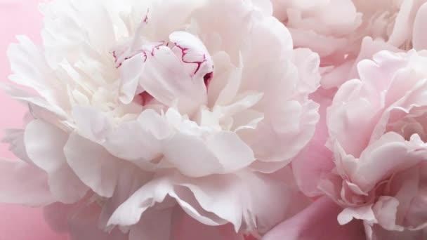 Romantické růžové pivoňky, pastelové pivoňkové květy v květu jako svátky, svatby a květinové zázemí