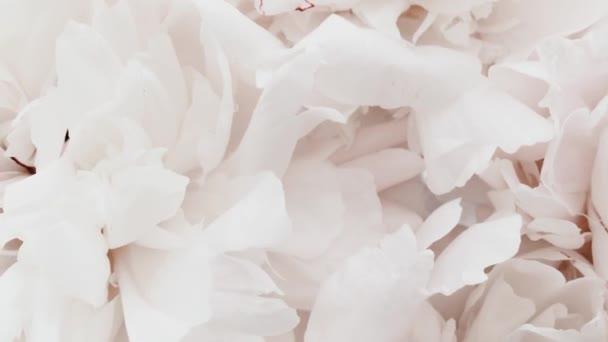 Fehér bazsarózsa virágos, pasztell bazsarózsa virágok nyaralás, esküvő és virágos háttér