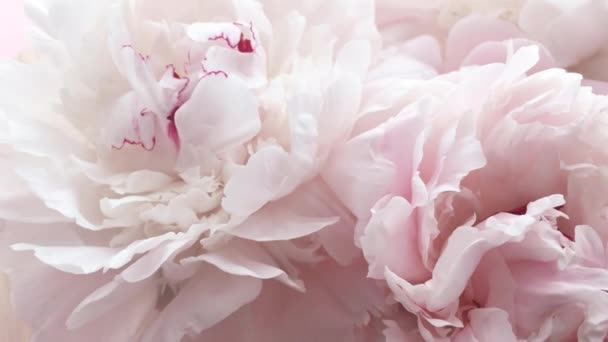Romantic pink peonies, pastel peony flowers in bloom as holiday, wedding and floral background