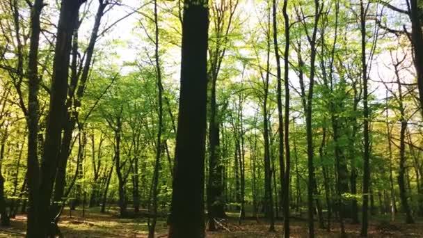 Slunce svítí vrcholky stromů v lesní krajině, zelené listí při západu slunce, přírodní prostředí a příroda
