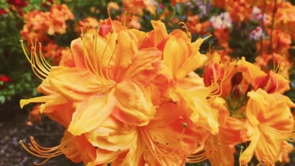 Orange flowers blossom in summer garden, flowers in bloom, floral and nature