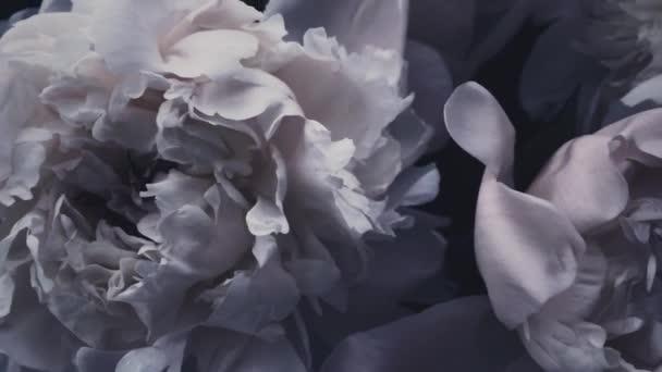 Sötét évjárat bazsarózsa, pasztell bazsarózsa virágok virágzik, mint nyaralás, esküvő és virágos háttér