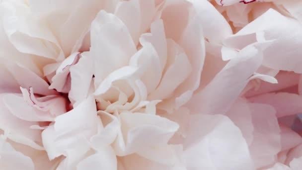 Gyönyörű bazsarózsa virágos, pasztell bazsarózsa virágok, mint nyaralás, esküvő és virágos háttér