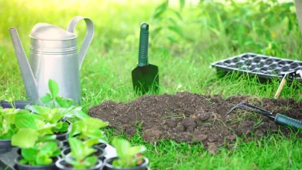 oříznutý pohled zahradníka vytahuje štítek z půdy a pomocí hrák