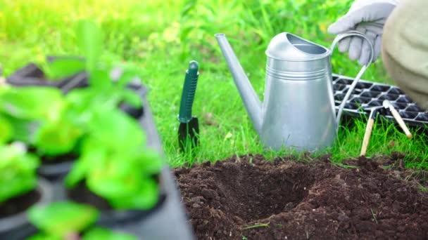 Teilansicht des Gärtners im Handschuh, der Gießkanne in der Hand hält und Wasser in den Boden gießt