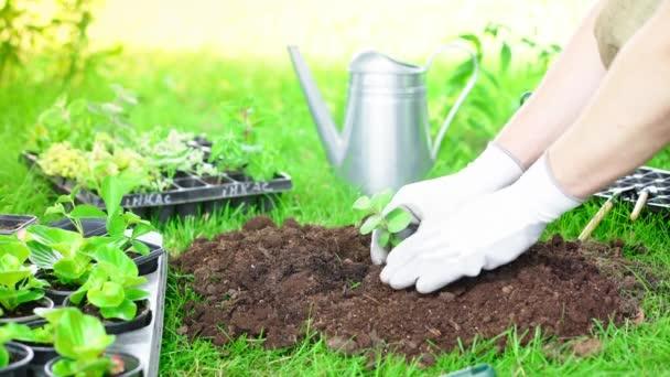 částečný pohled na zahradníka v rukavicích na výsadbu v zahradě