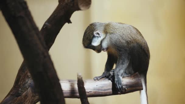 szelektív fókusz aranyos majom -ban állatkert