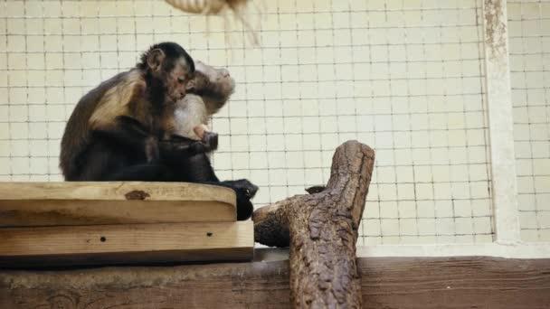 selektivní zaměření hnědých opic jedoucích chléb