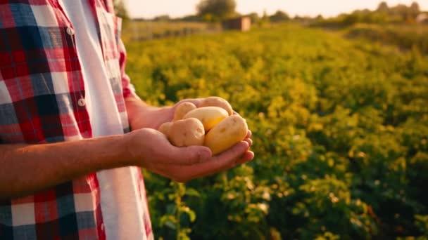 oříznutý pohled na zemědělce držícího čerstvé brambory v rukou