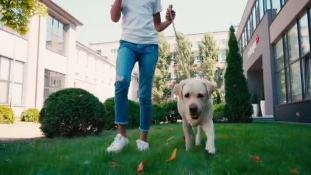 Vágott kilátás afro-amerikai lány séta labrador zöld gyep