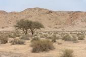 Útban Jebal Bé, az Egyesült Arab Emírségekben a legmagasabb hegy a Ras Al Khaimah északi Emirátus egyszerű, közös, mégis gyönyörű kilátással.