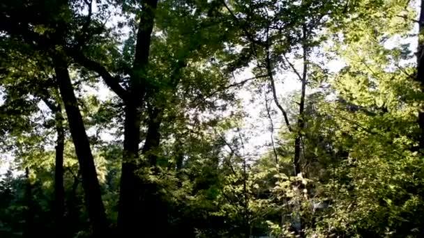V pozdním odpoledním slunci v Kanadě svítily sluneční paprsky jasně zelenými hustými lesními stromy..