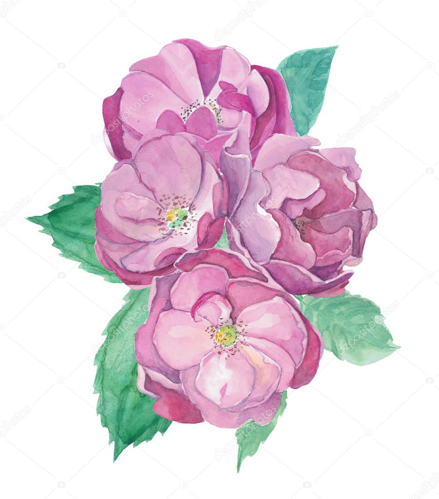 Watercolor roses composition. Well for greeting card, wedding invitation, another selebration.