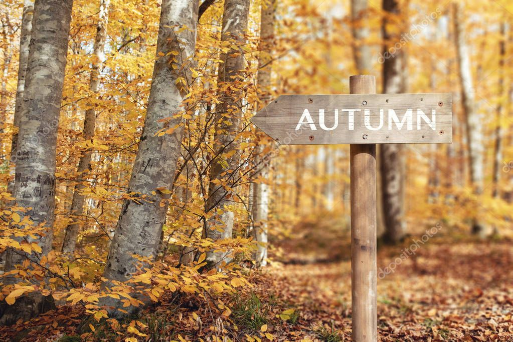 Wooden signpost and Beautiful autumn colors of nature.