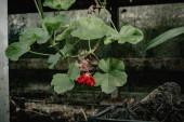 Fotografie ein Strauß Blumen und Pflanzen im Gewächshaus. grüne Pflanzen im Raum beleuchten die Natur