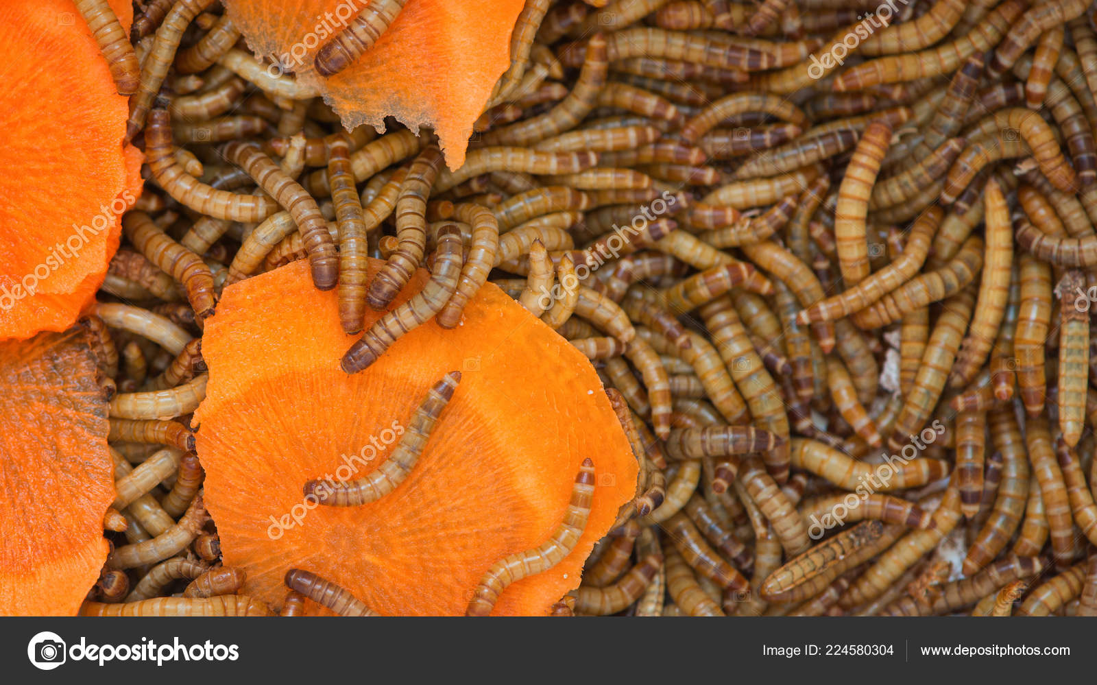 червячки в моркови