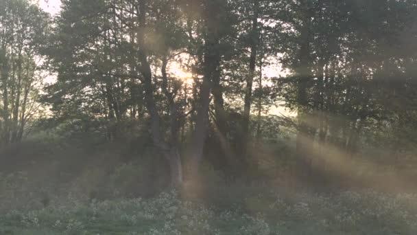 Nádherná ranní scenérie v lese, kde slunce vrhá sluneční paprsky skrz mlhu a větve stromů