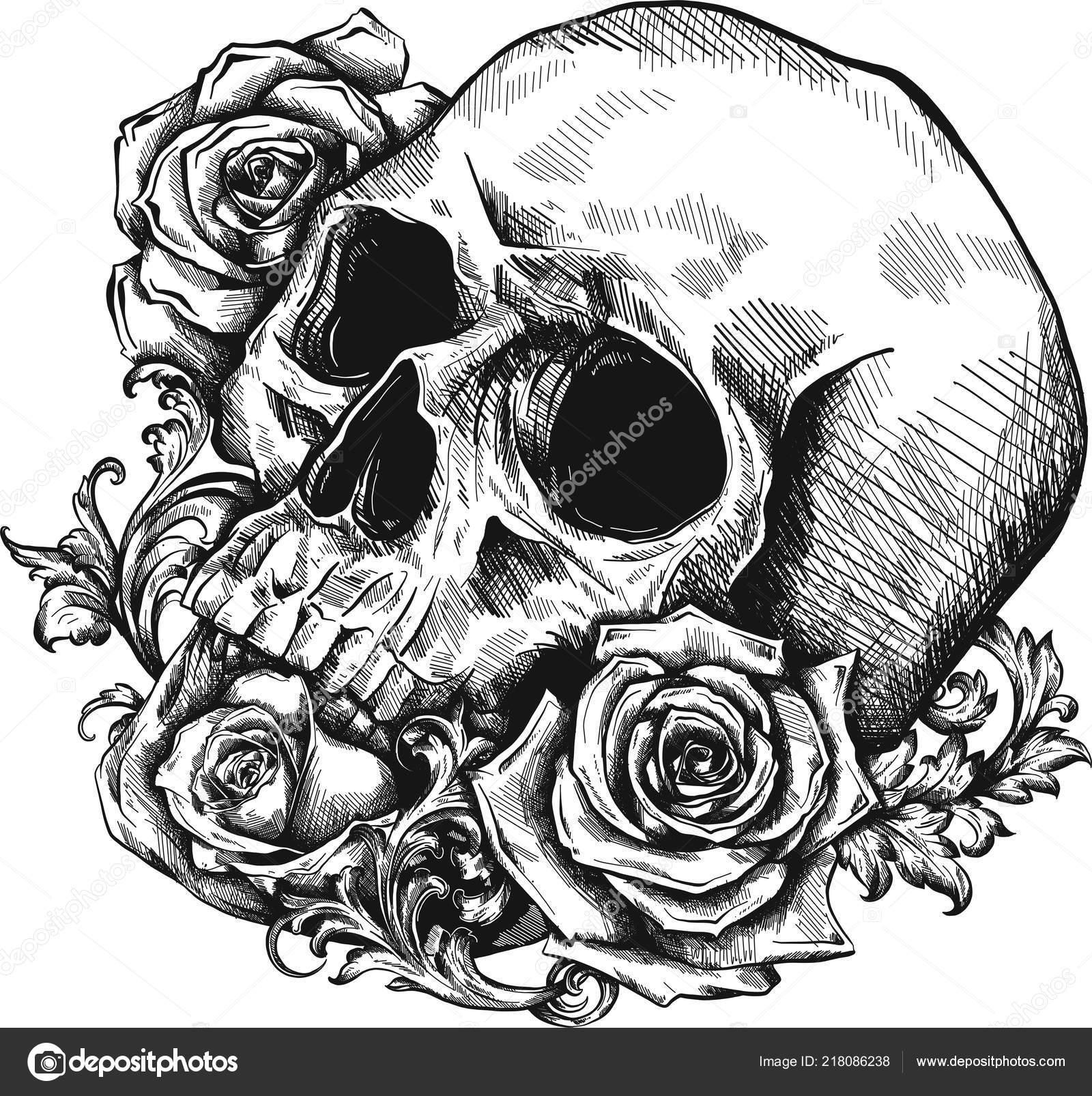 11 Gorgeous Ͽ� Black� Blooms: Lebka Růží Bílém Pozadí