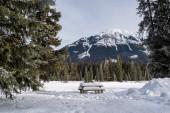 Zasněžené piknikový stůl na odpočívadle v Kootenay National Pa