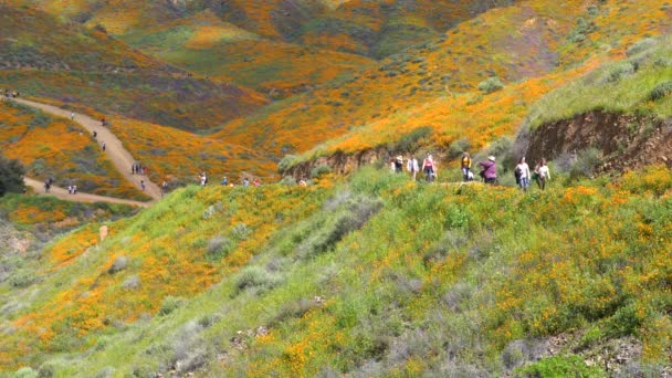 Lake Elsinore, California - March 22, 2019: Crowds along the hiking trail at Walker Canyon, enjoying the poppy superbloom
