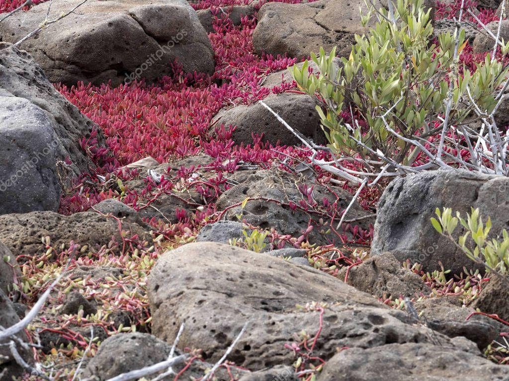 color xerophytic coastal vegetation, Galapagos, Ecuador.