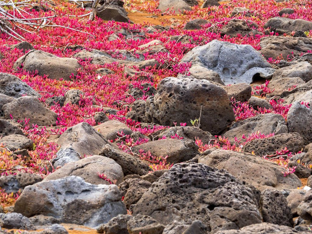 color xerophytic coastal vegetation, Galapagos, Ecuador.