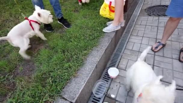 dog, yorkshire terrier, many dogs, white dog