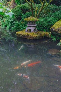 View of pond with carps and pagoda light at Portland Japanese Garden, Portland, Oregon