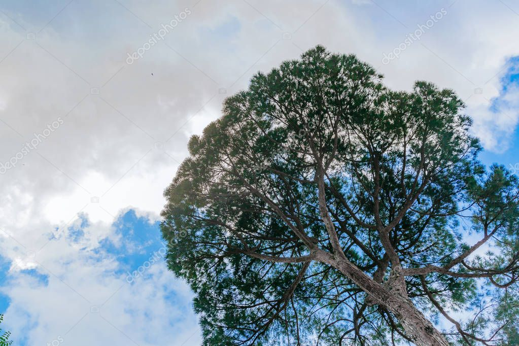 Upward view of canopy of tree against sky and clouds