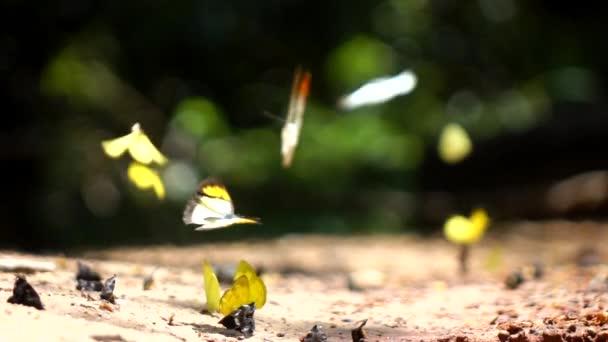Pillangó a virágok lassú mozgás