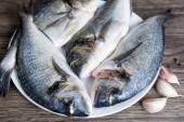Čerstvé suroviny pražman ryba