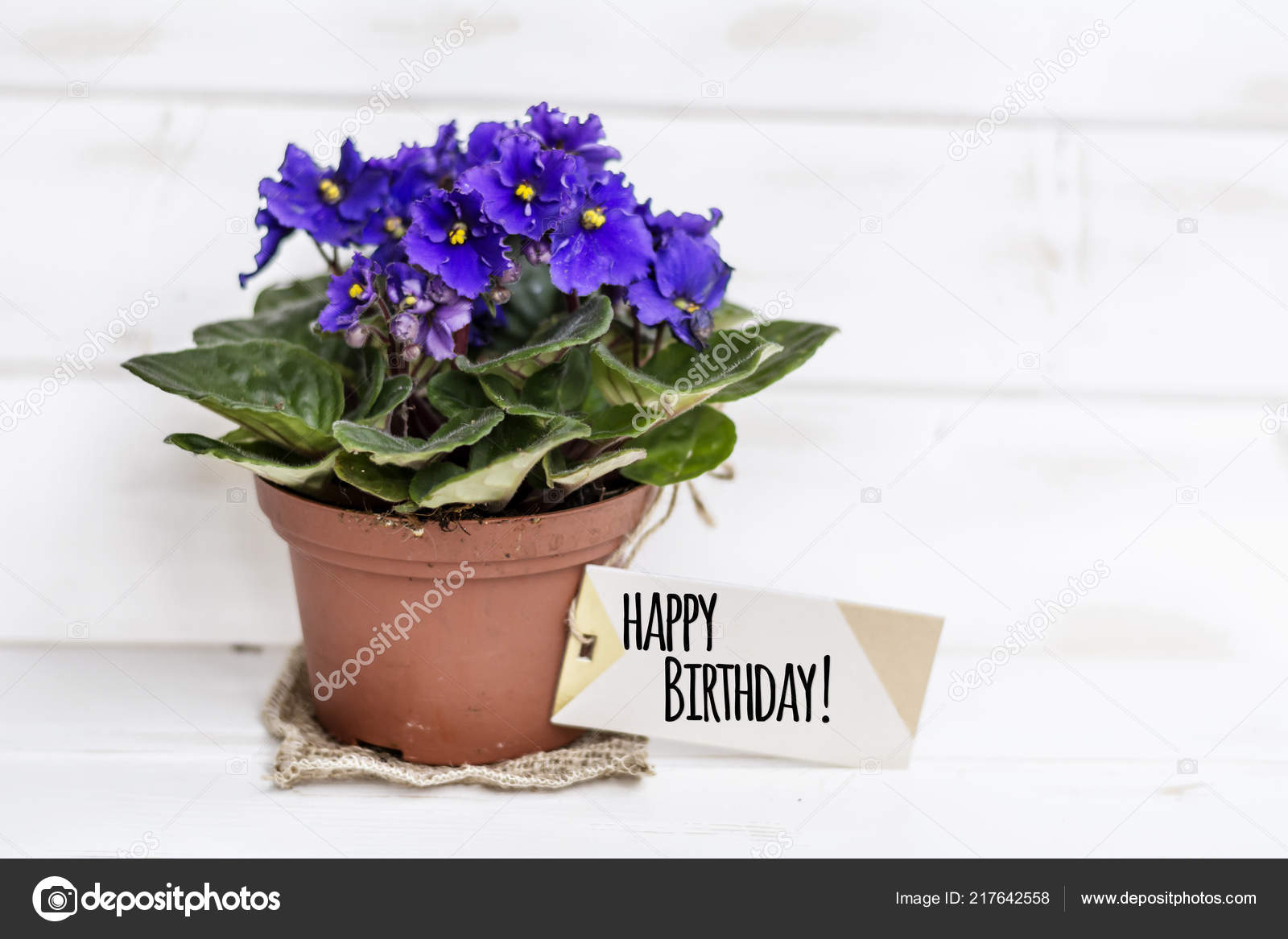Pot Violet Flowers Birthday Gift Message Card Stock Photo