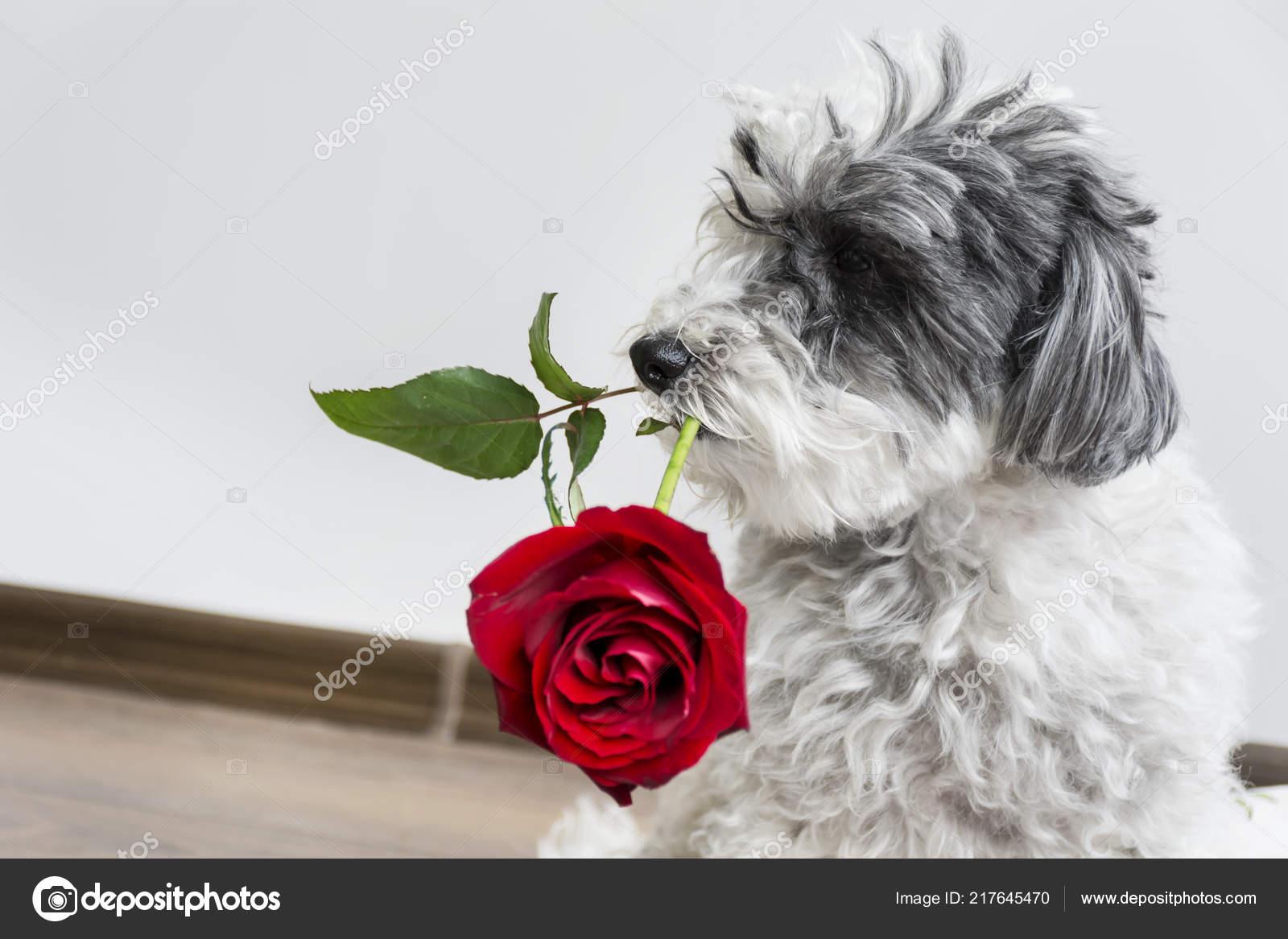 Puppy liefde dating site