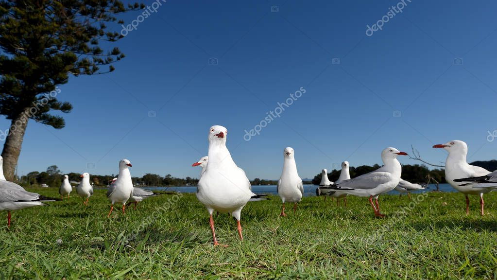 Seagulls flying against a blue sky and green grass