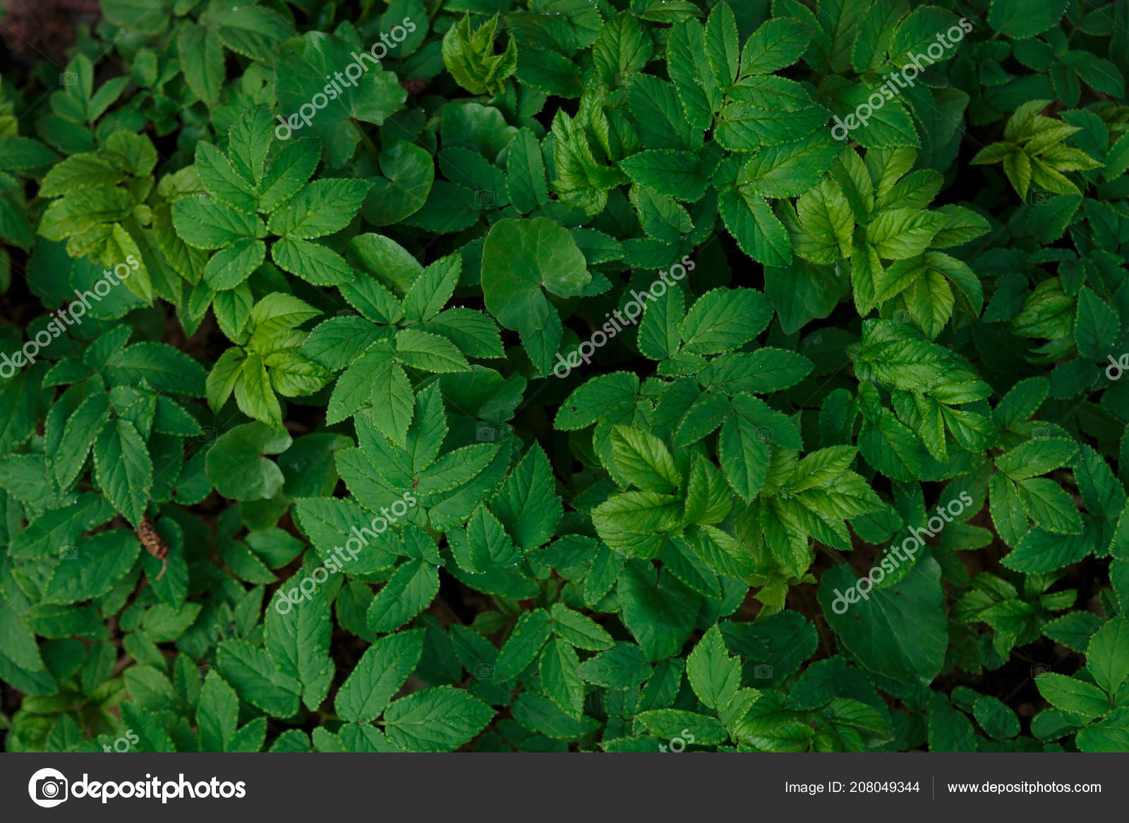 Beautiful Green Natural Background Nature Photographie