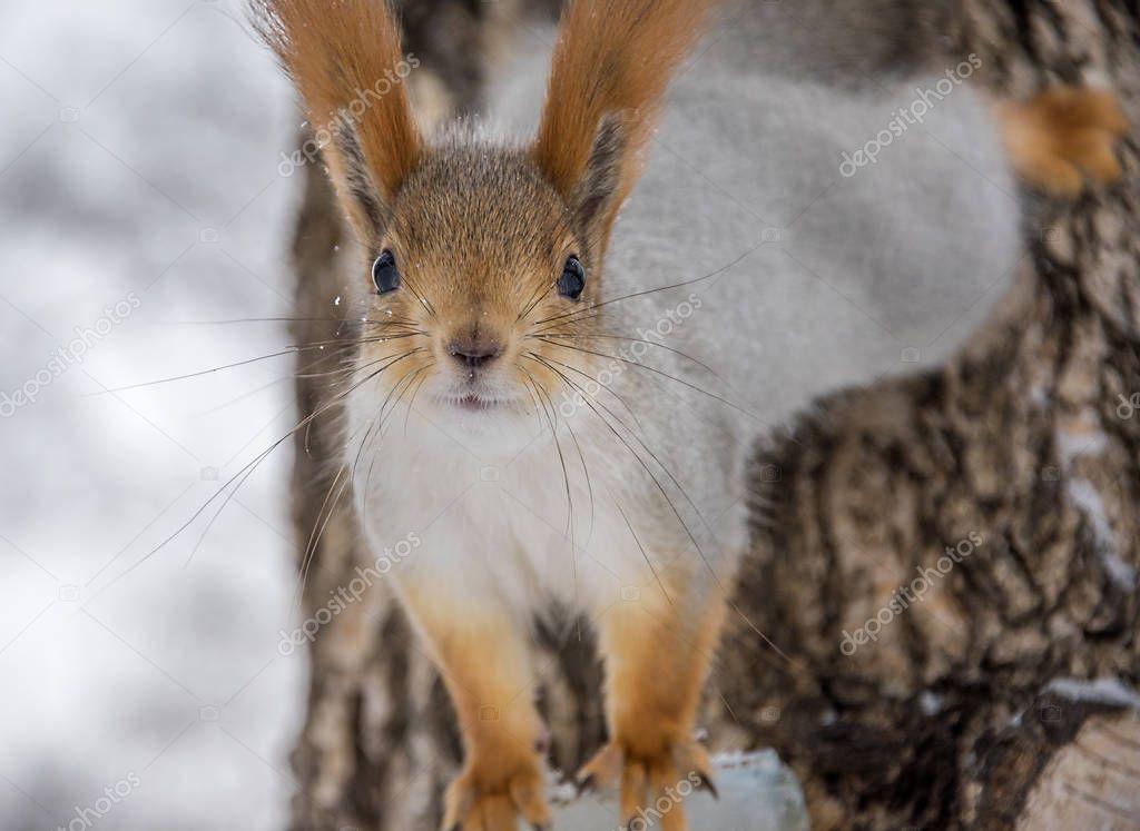 City Park. squirrel acrobat