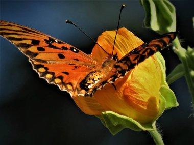 Beautiful butterfly on flower