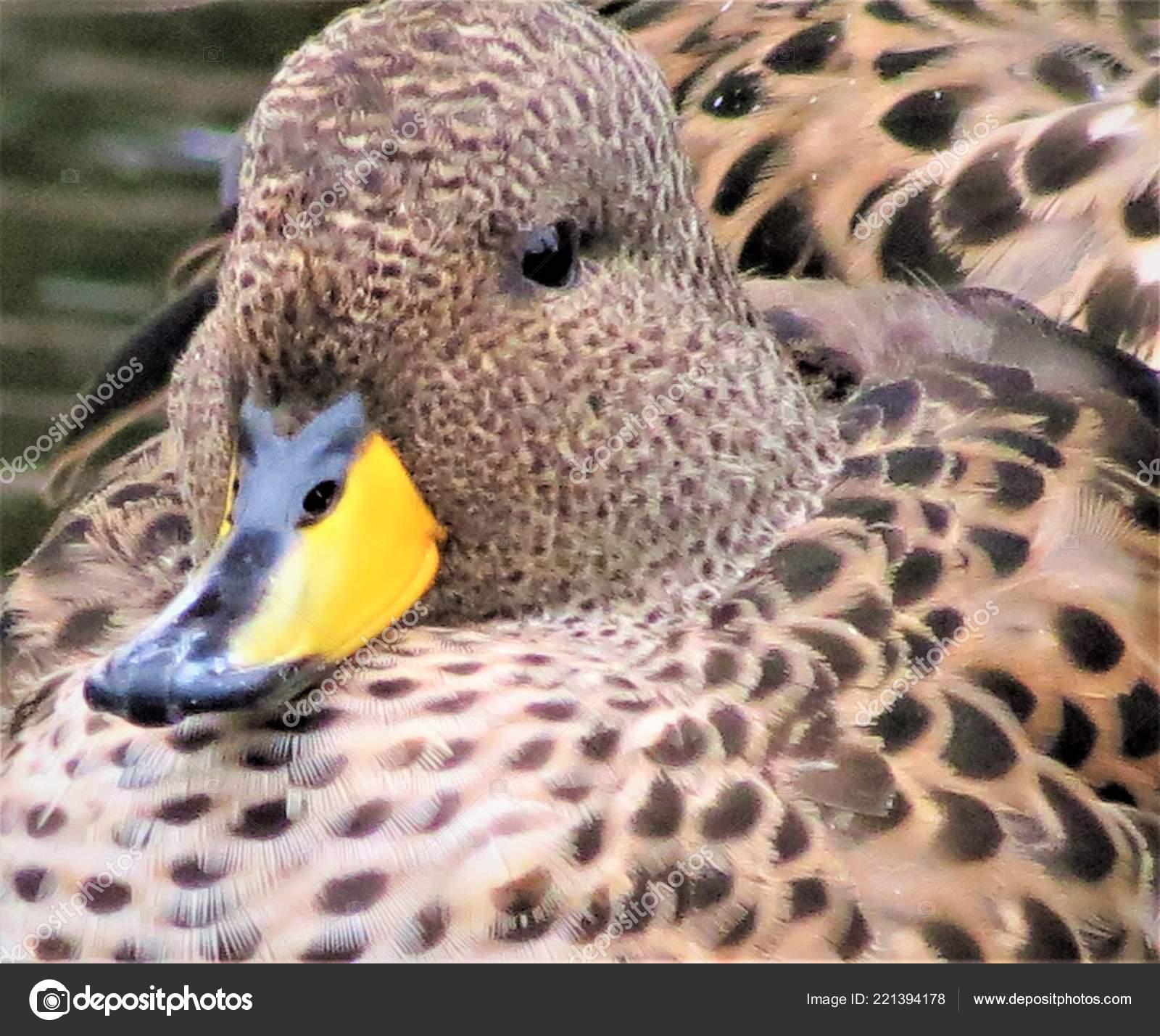 Obrázky pěkných ptáků