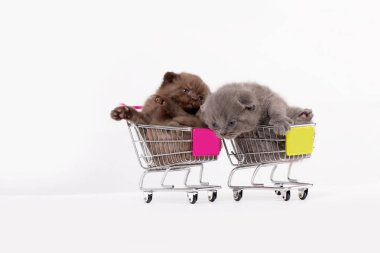 Beautiful kittens are sitting in a shopping basket on a white background