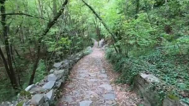 Turistické stezky v horském lese