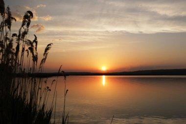 Sunset with reeds at lake Velence