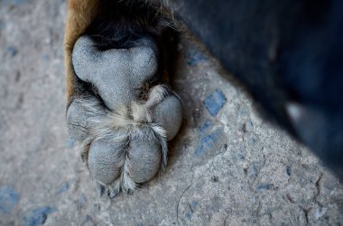 dog's paw bunches and claws