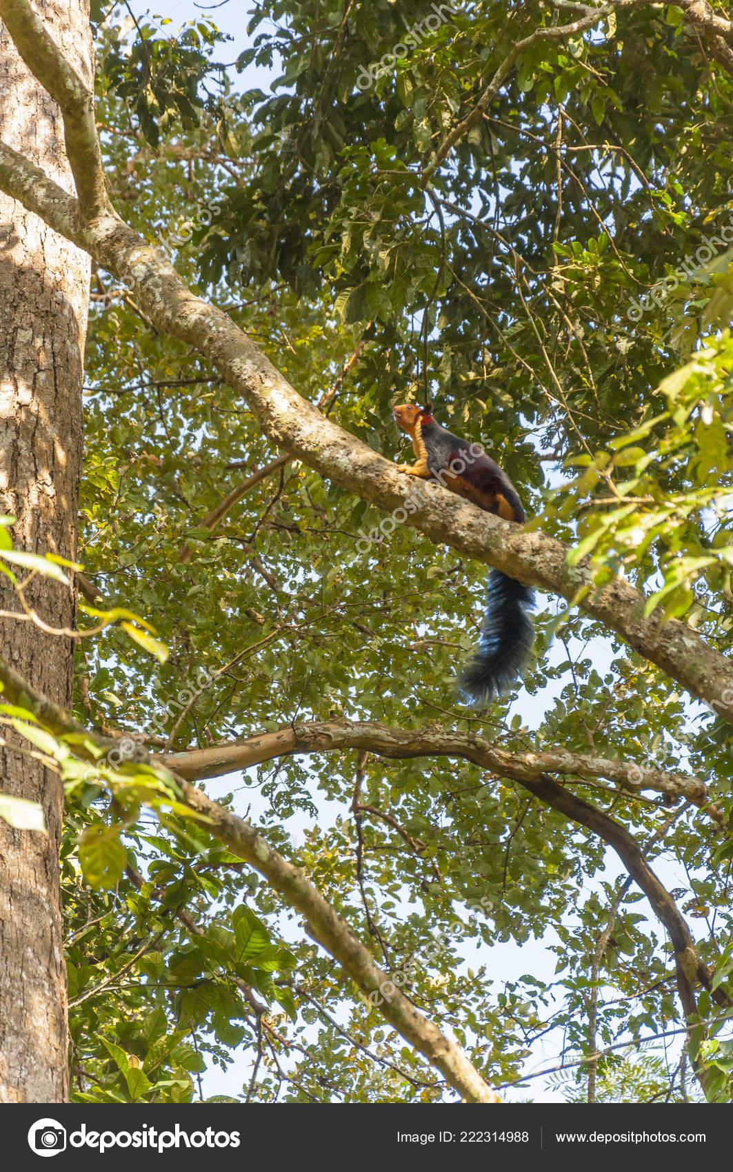 Ινδικό άνθρωπος μεγάλο πουλί